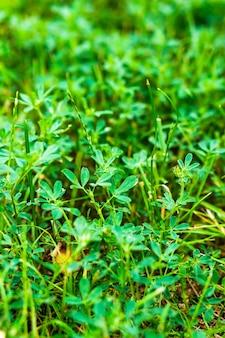 태양 아래에서 성장하는 활기찬 녹색 잔디의 총을 닫습니다