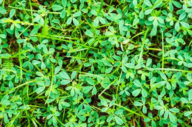 太陽の下で成長している鮮やかな緑の草のクローズアップショット
