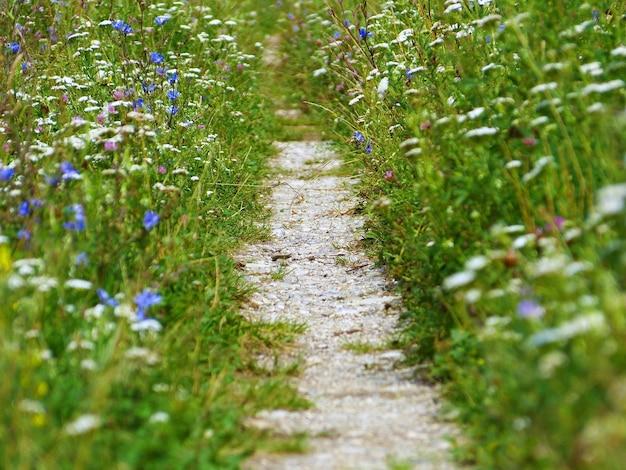Immagine ravvicinata di un percorso rurale circondato da magici fiori di campo