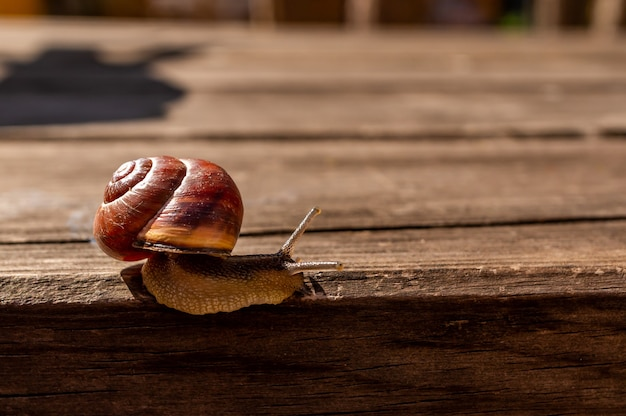 Close up shot of a snail on a wooden surface