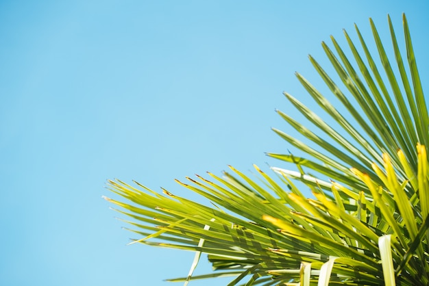 Close up shot of tropical palm trees - perfect for a summer