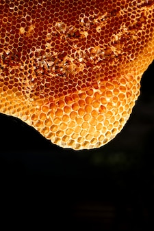 Close-up shots of bees working in honey cells