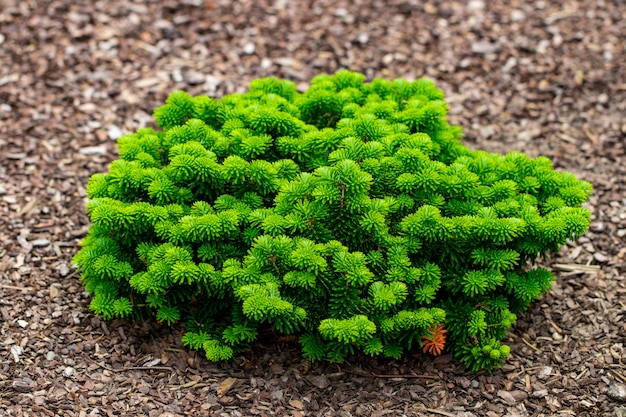 Close up shrubs and green lawns