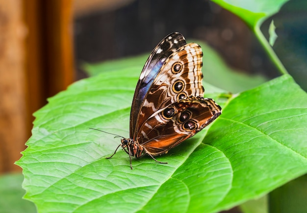 Крупным планом вид сбоку бабочки на зеленом листе весной или летом