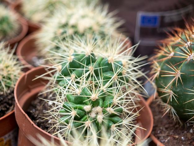 Крупным планом вид сбоку кактусов с иглами. домашние растения