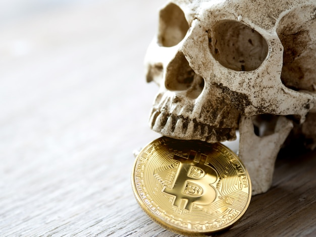 Close up of skull biting golden bitcoin on wooden table.