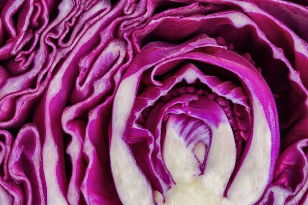 Close up sliced fresh purple or red cabbage in a half