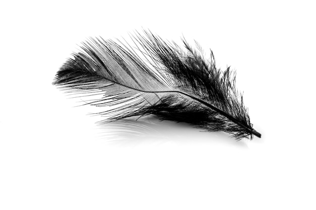 Close-up of small black feather isolated on white backgroind