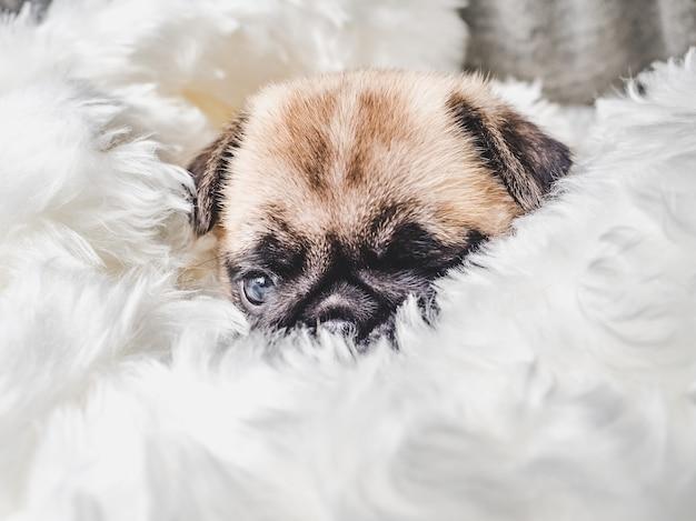 푹신한 담요에 작은 개를 닫습니다