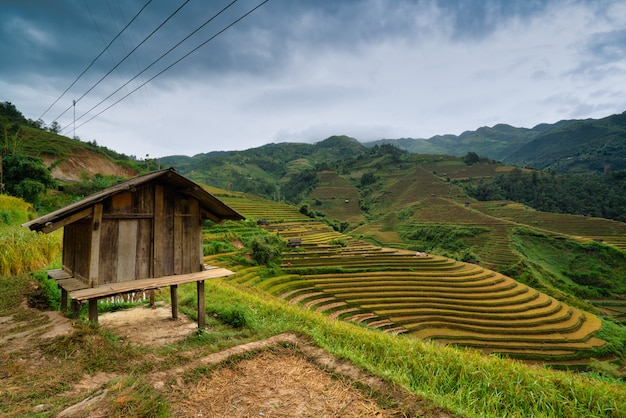 Close up of a small hut in terraced rice field