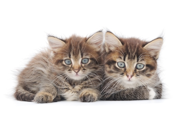 Close up small kittens in studio