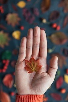 Close up of small red japan maple leaf lying on palm of man, blurred autumn colorful leaves on background