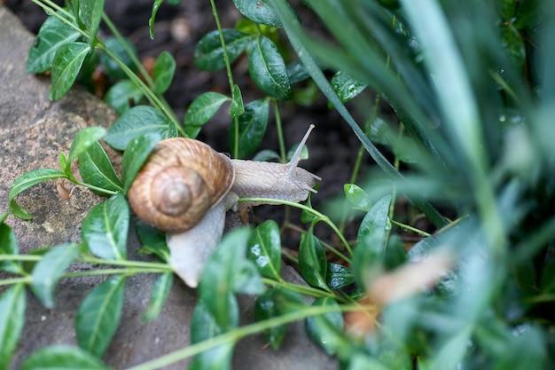 Закройте вверх по маленькой улитке на зеленых лист в саде