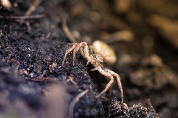 Chiuda in su di piccolo ragno nel giardino