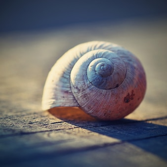 Close-up of snail shell on a plank