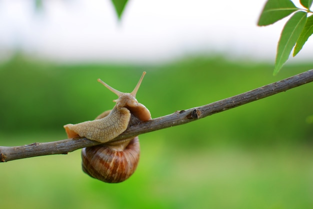Close-up of a snail sitting on a flowering tree branch in the garden