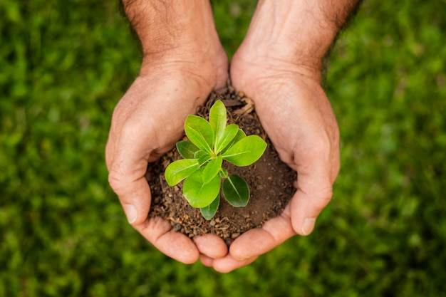 토양 새싹을 닫습니다