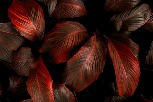 クローズアップspathiphyllumcannifolium葉抽象的な緑のテクスチャ自然背景熱帯の葉