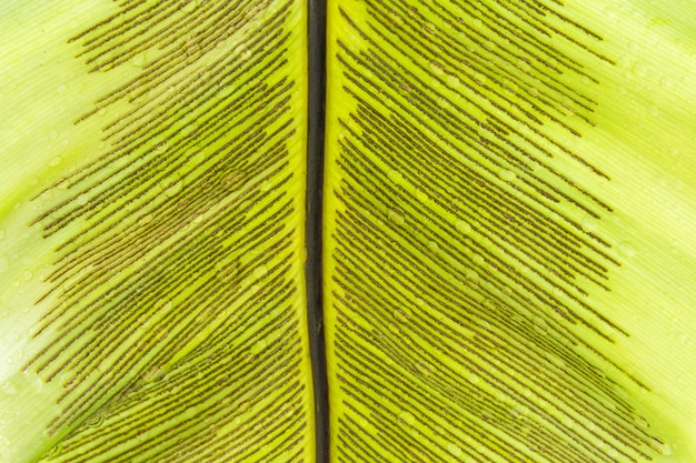 Close up sperm leaves of fern.