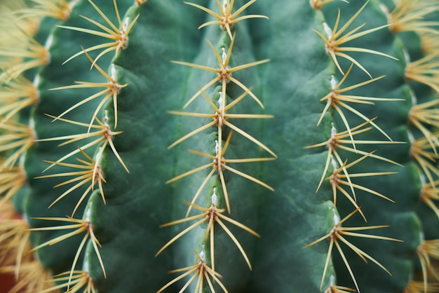 Primo piano del cactus spinoso