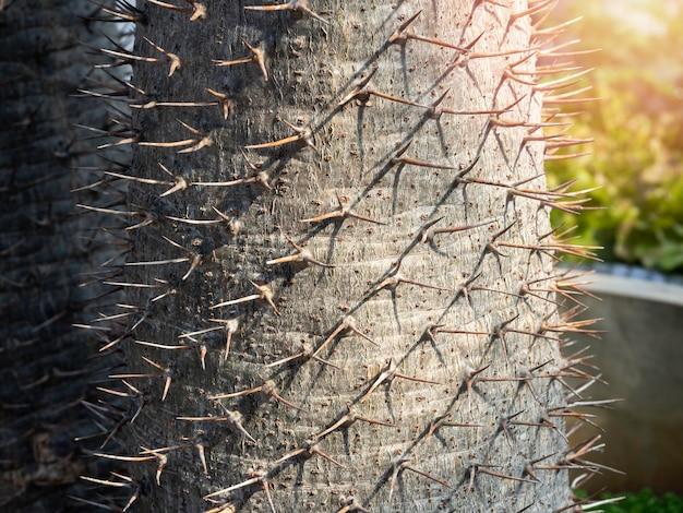 サボテンの幹の棘を閉じます。マダガスカルヤシ(pachypodium lamerei)のとげの幹のクローズアップの詳細。緑の自然な背景。