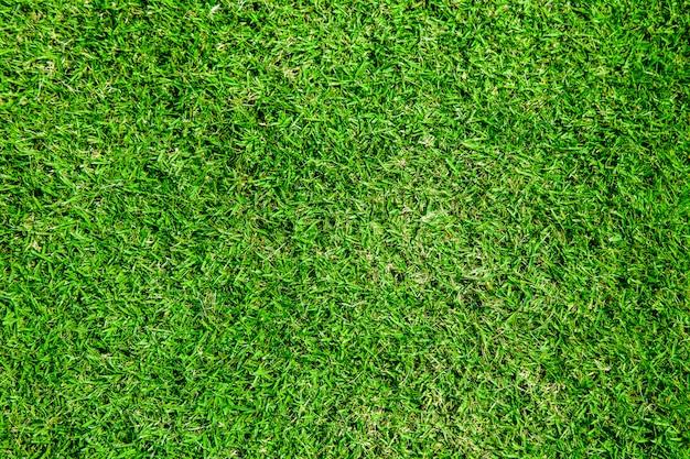 Close up of sport field grass