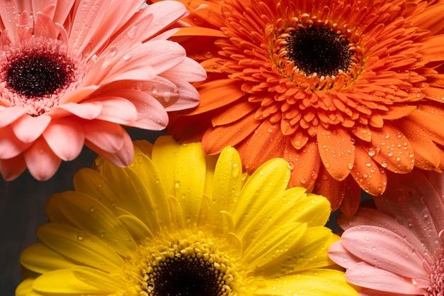 Close-up of spring gerberas