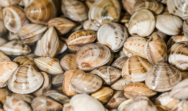 Close-up of stack of fresh clams