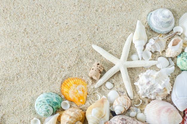 Close up of starfish and seashells on white sand background