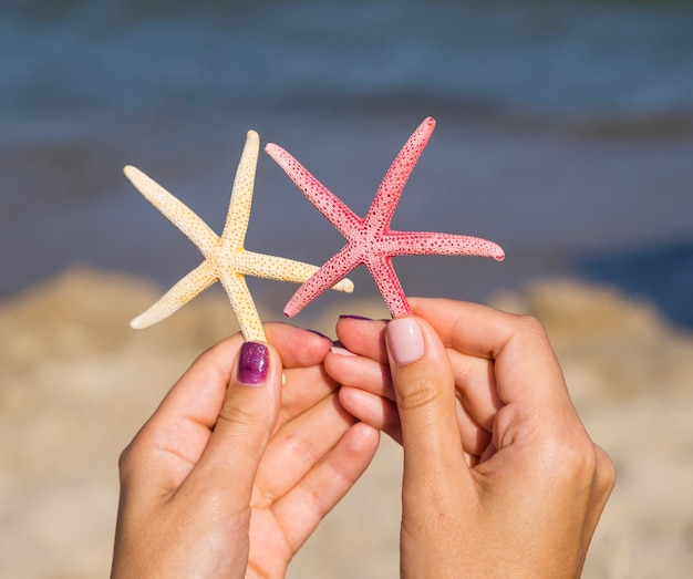 Close-up of starfishes being held next to the sea