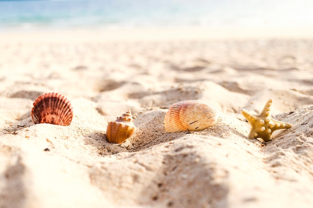 Close-up of stars and shells on beach