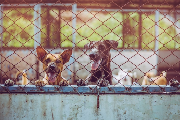 Close up stray dogs. abandoned homeless stray dogs is lying in the foundation.