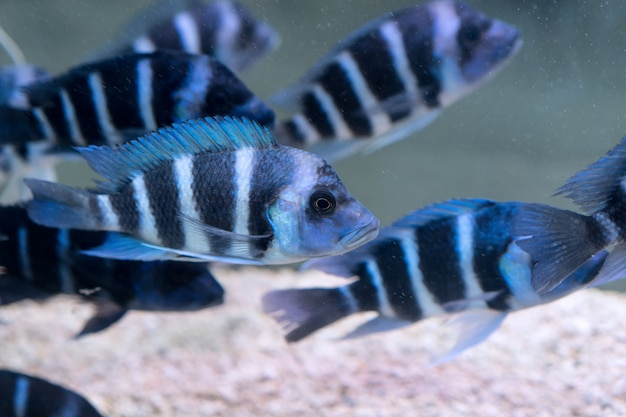 Close-up of striped fishes