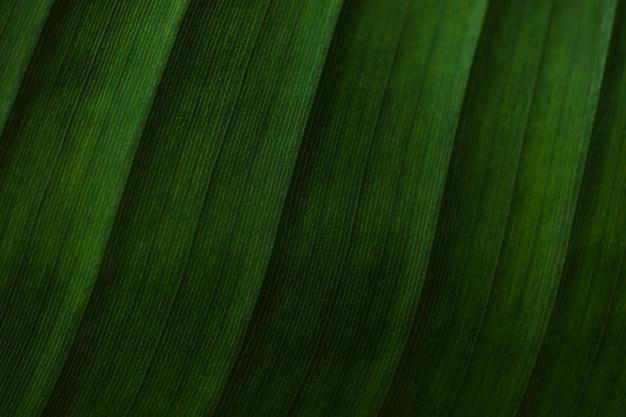 Крупным планом полоски на пальмовом листе