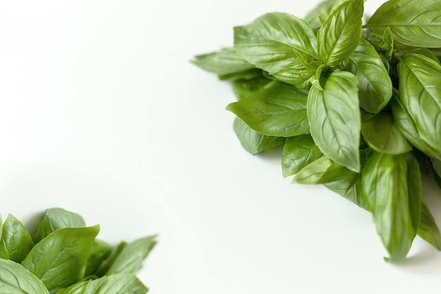 Close up studio shot of fresh green basil herb leaves isolated on white