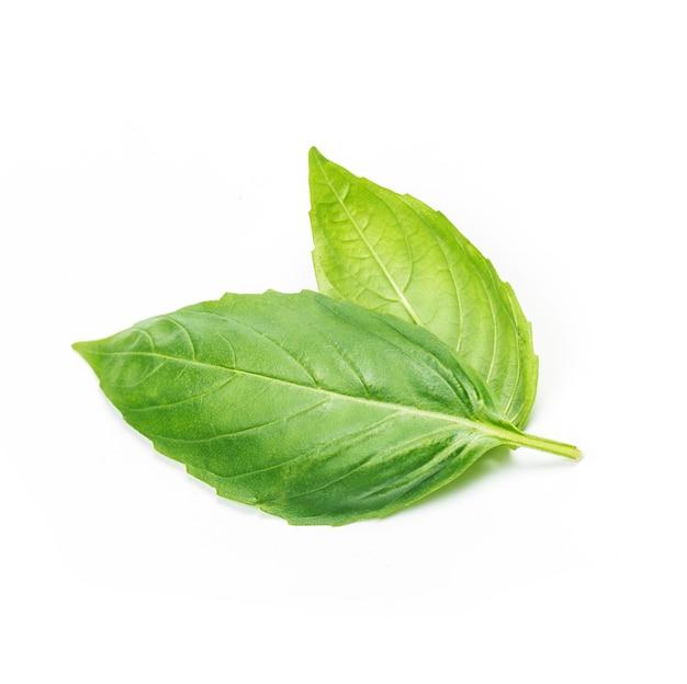 신선한 녹색 바 질 허브 잎 흰색 배경에 고립의 스튜디오 샷을 닫습니다. 스위트 제노 베제 바질