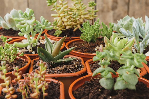 Close up of succulent home plant collection on wooden table