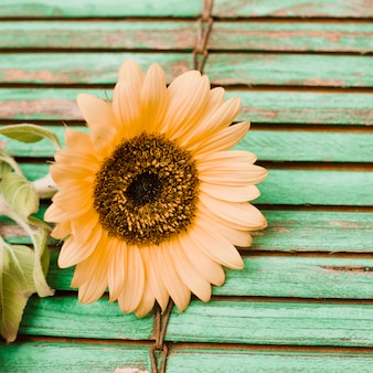 Close-up of sunflower on wooden textured background