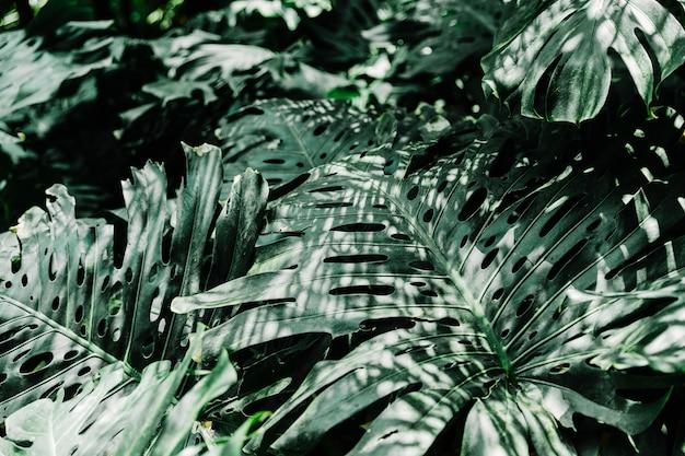緑、こぼれた、葉