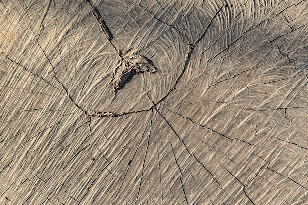Close up surface wood of cut tree texture