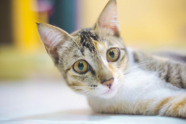 Заделывают удивленный кот лежал на полу