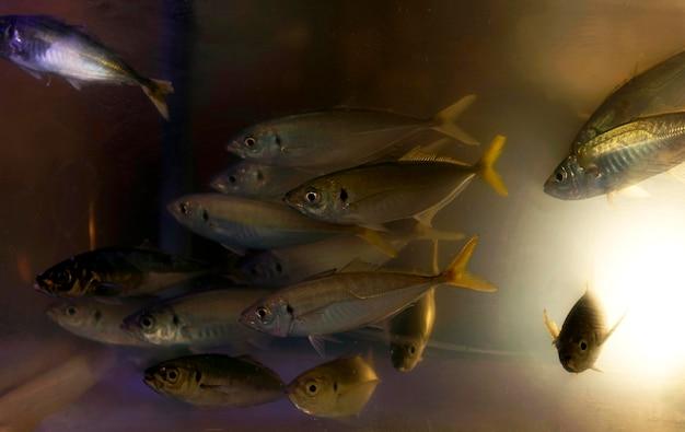 Крупный план аквариума с большим количеством рыбы