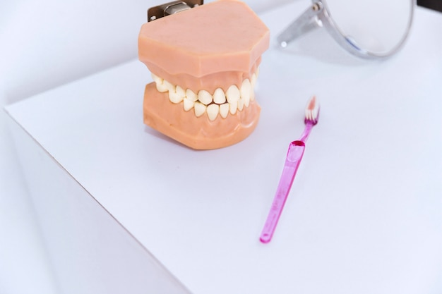 Close-up of teeth model and toothbrush on table