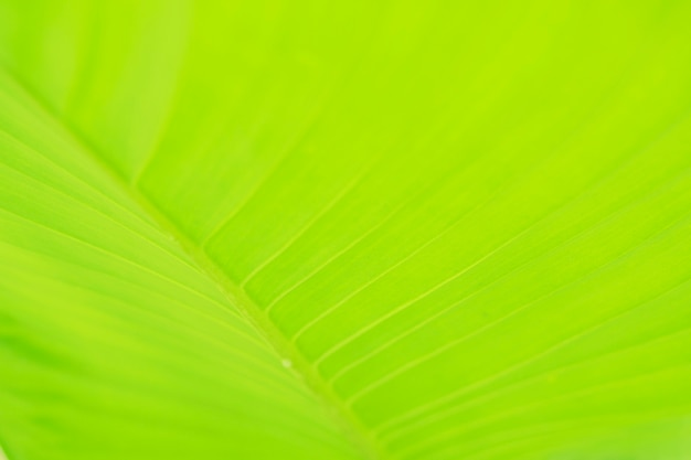 Close up texture of fresh leave background
