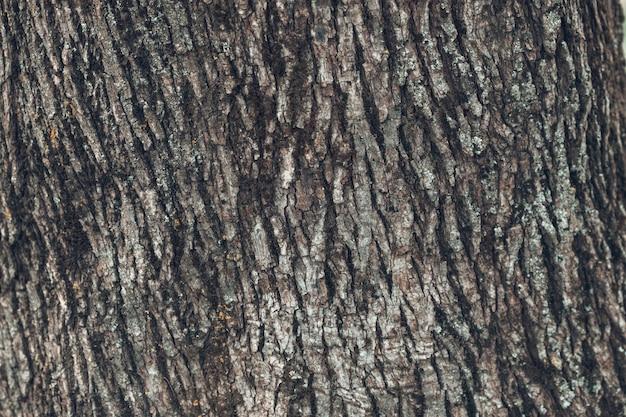Close up texture of gray tree bark