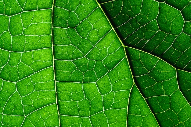Close up texture of green leaf.