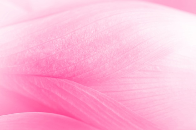 Close up texture of lotus petals made with color filter in blur style for background Premium Photo