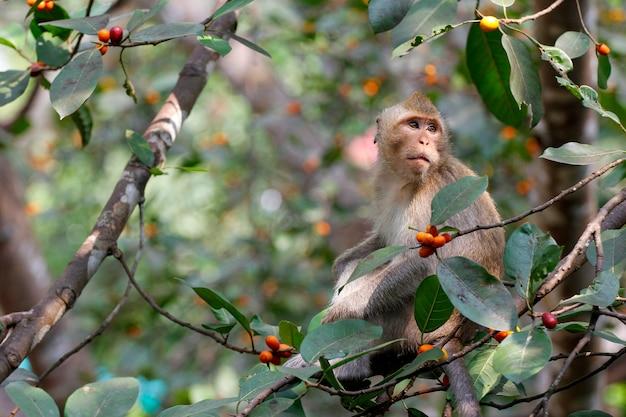 Крупным планом обезьяна ест еду на дереве в таиланде