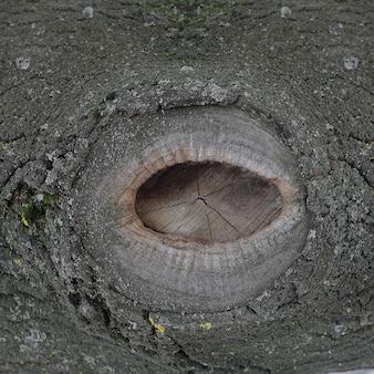 クローズアップ。木の樹皮の雪。