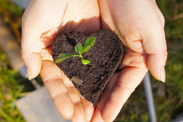 작은 식물과 화분 토양의 심장에 근접